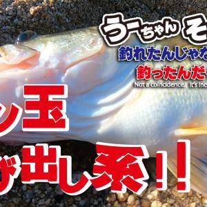 琵琶湖 湖西の浜で予告通りに60は釣れたのか?! めん玉飛び出し系のバスを絞り出せ!