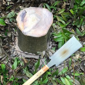庭の樫の木をノコギリで切り落としてみた・・・