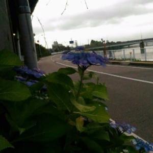 紫陽花‥☆