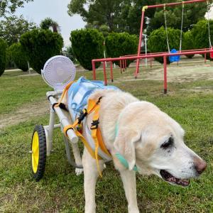 扇風機付き車椅子