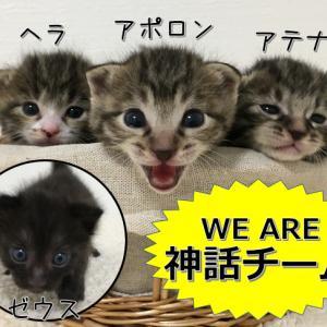 子猫の開眼秘話 - 神話チーム