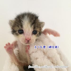 赤ちゃん猫、来ました - 岬兄弟