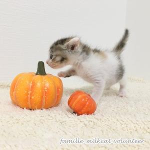かぼちゃガールズ - 童謡チーム