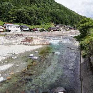 祝 益田川解禁釣行 きれいな川できれいな鮎