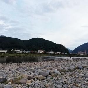 長良川 郡上連荘釣行 いかにして泳がせるか