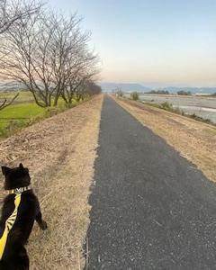 犬も片側通行でお散歩♫