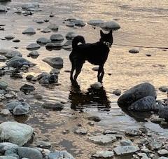 川遊びが楽しい寅次郎