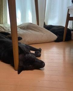 寝る寅次郎&さくら