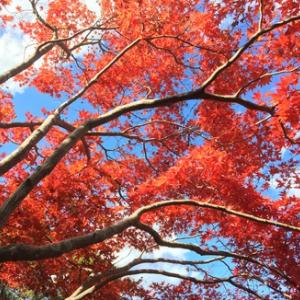 秋を堪能・・・紅葉は綺麗だねー