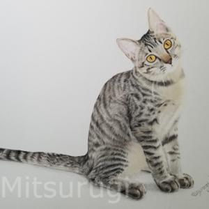 MIX キジ猫