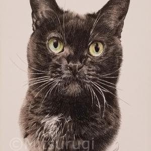 MIX 黒猫