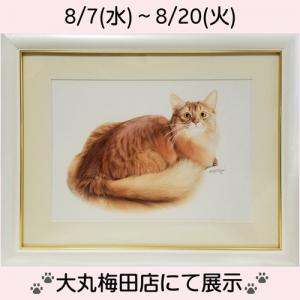 「 ねことしあわせDAYS 」 大丸梅田店での作品展示のお知らせ