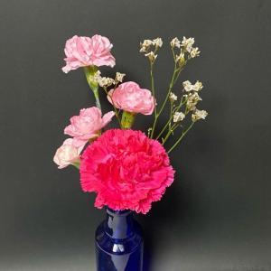 ブルーミーライフで届いた母の日の花3種類!『カーネーション、スプレーカーネーション、ハイブリッドスターチス』
