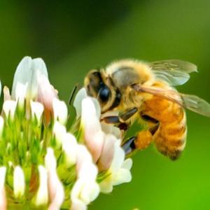 2022年の現実を加速させるアシュタールと蜂の特別ライトワーク