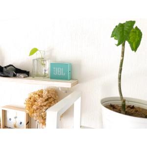 観葉植物、小掃除、おすすめユーチューブなど
