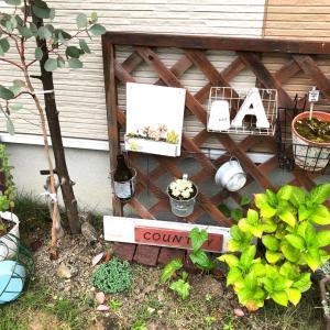 梅雨のお庭
