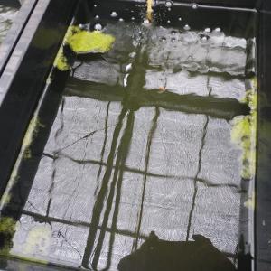 手動の全自動水槽水替えオーバフロー式