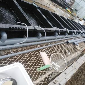 手動全水槽水替えオーバフロー