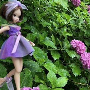 雨と紫陽花とお人形