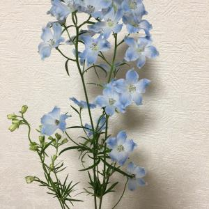 お花: スプレーデルフィニウム