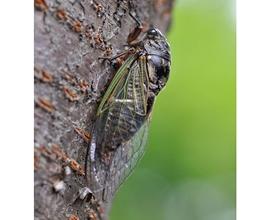 昆虫採集の記憶