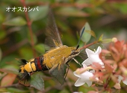 昆虫の技術開発