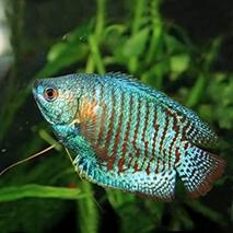 熱帯魚の記憶