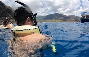 ハワイで、野生のイルカと一緒に泳ぐ!!