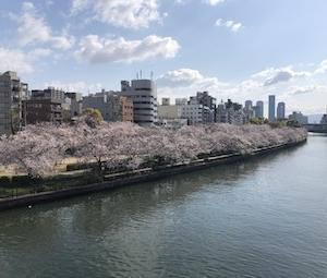 2020年・南森町・天満天神・中之島の桜満開!