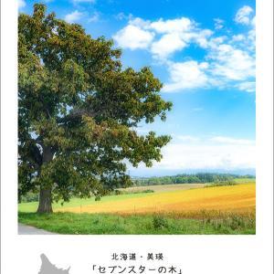 癒しフォト:セブンスターの木 / 可愛い子(&ぬいぐるみ)ちゃん