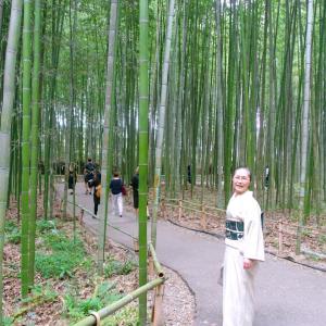 突然ですが、嵐山の竹林と和菓子老松茶房へ:伊予縞単衣に型染め添田敏子さんの帯