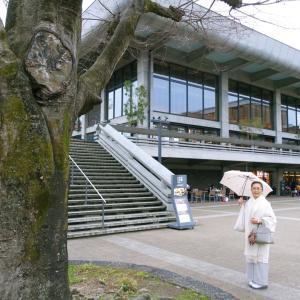 退院二十五日目、雨の中、京都モダンテラスへ!山本由紀さんの辻が花帯締めて