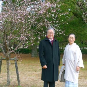 お正月に、京都御所で桜発見?!護王神社に初詣!上村松園「序の舞」付け下げで