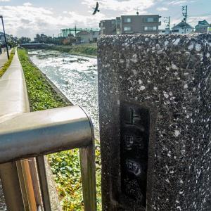 12月1日(日)野川を歩く-04-下見02