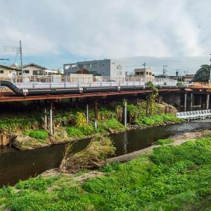 12月1日(日)野川を歩く-04-下見03