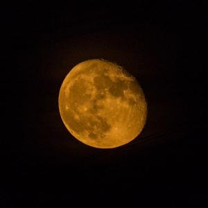 6月9日朝のウォーキング-月と遠望・キジと田んぼ