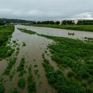 7月25日(土)増水した浅川ベリを歩いた。
