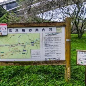 7月27日(月)裏高尾-蛇滝「イワタバコ」