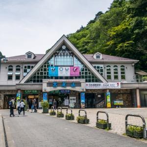 5月28日(金) 高尾山6号路でセッコク探しA