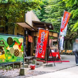 5月28日(金) 高尾山6号路でセッコク探しC最終