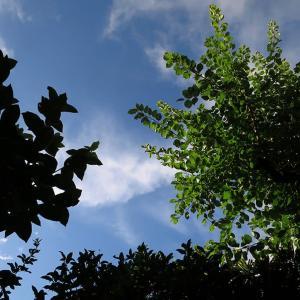 7月27日(土)の朝、「アレー!?青空が見える!!」