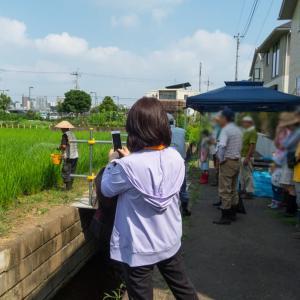 9月3日(土)日野市田んぼの学校‐田の草取り