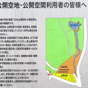 8月5日(月)野川を歩く01-下見(西国分寺駅~武蔵小金井駅)中半