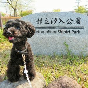 お花見散歩② at 都立汐入公園