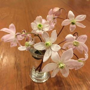 あえかなる早咲きのクレマチス