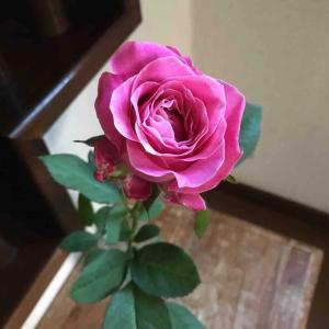 「壁の花」