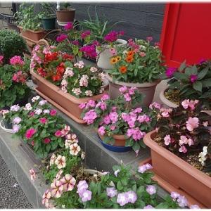 華やかな家の前の花々!