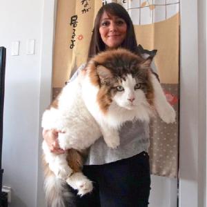 「大型犬はいるのに大型猫はいない理由」