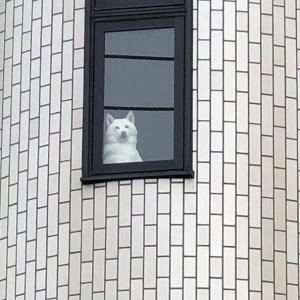 「おい犬、朝マック買ってこい」