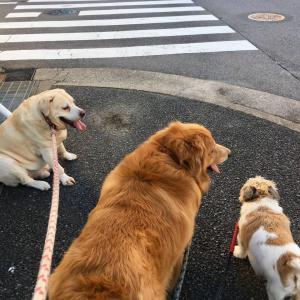 「うちの犬太り過ぎとか言われたけど言うほどか?」